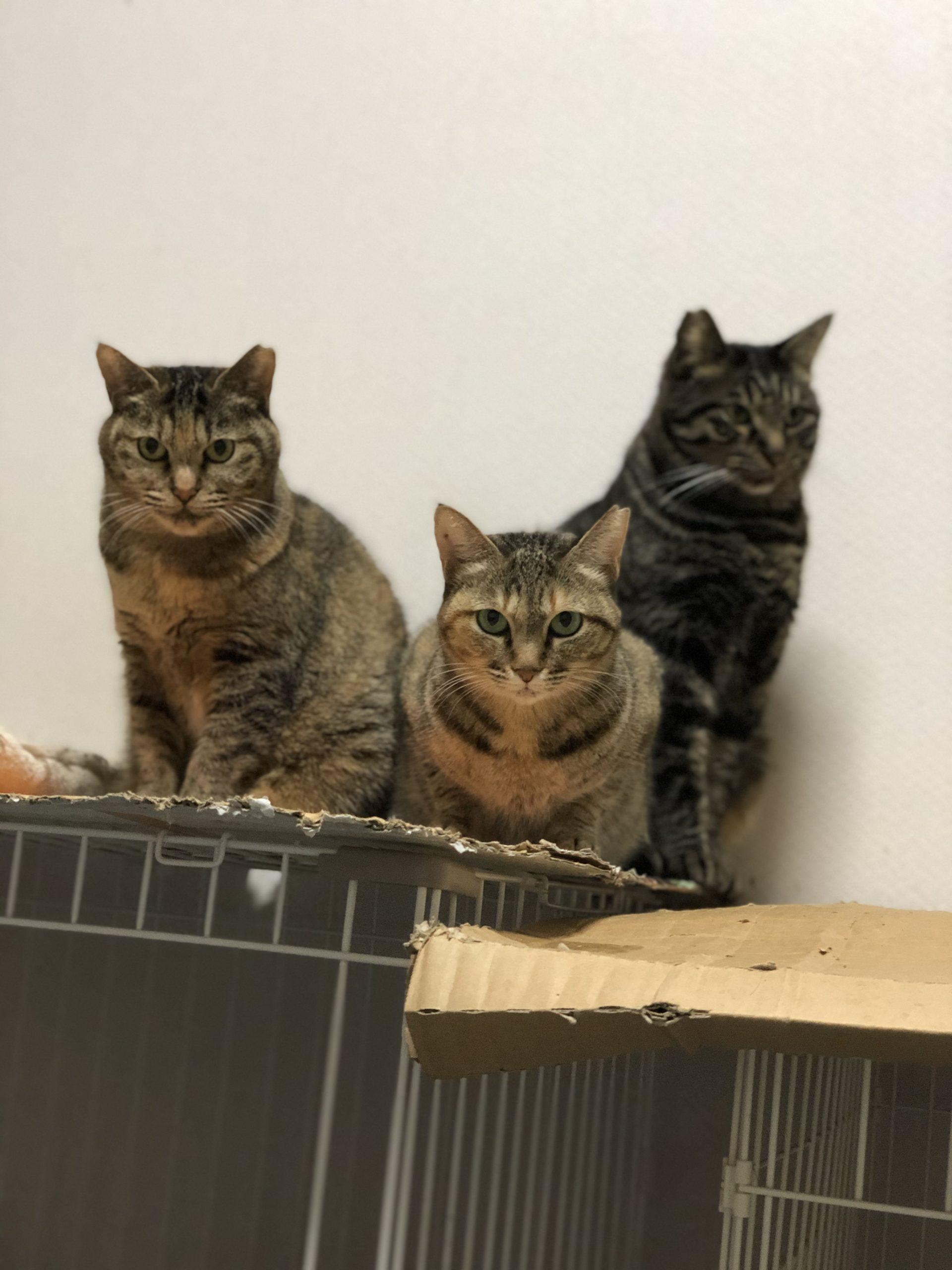 飼い主がいないというだけで、殺処分されてしまうたくさんの猫達。そしてそのほとんどが、幼い小さな子猫達です。こうした不幸な子猫達をこれ以上生み出さないために「動物愛護基金」は飼い主のいない猫達の不妊手術費用に使われています。